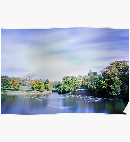 Pond in the park with ghostly gulls Poster
