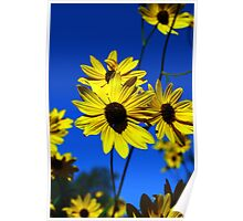 Blue Skies With Lots of Sunshine Poster