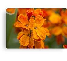 Macro Orange Flowers Canvas Print