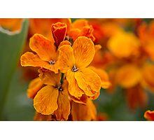 Macro Orange Flowers Photographic Print