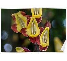 Macro Red and Yellow Flowers Poster