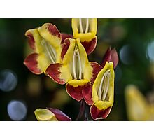 Macro Red and Yellow Flowers Photographic Print