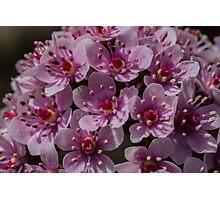 Macro Umbrella Plant Photographic Print