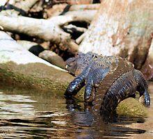 wild Florida by jdadkin