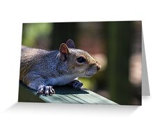 Cute baby squirrel Greeting Card