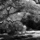 The Energy Of An Old Tree by Danuta Antas