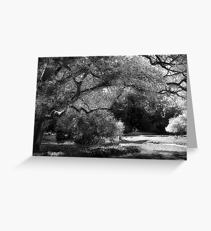 The Energy Of An Old Tree Greeting Card