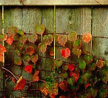 Fence Decoration ©  by Dawn M. Becker