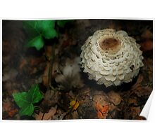 Ivy and Mushroom Poster