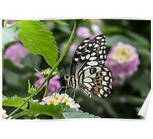 Macro Butterfly on Flowers Poster