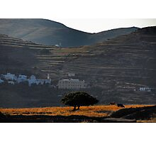 Twin olives Photographic Print
