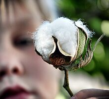 Pima Cotton by Mike Lewis