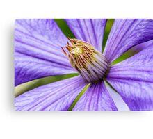Macro Purple Clematis Flower Canvas Print