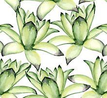 Succulents by JuliaBadeeva