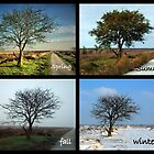 Tree and Seasons Change by ienemien