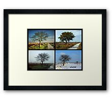 Tree and Seasons Change Framed Print
