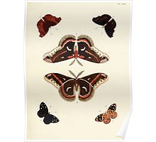Exotic butterflies of the three parts of the world Pieter Cramer and Caspar Stoll 1782 V1 0211 Poster