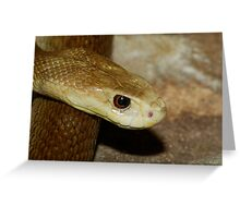 Taipan Greeting Card