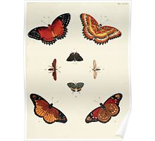 Exotic butterflies of the three parts of the world Pieter Cramer and Caspar Stoll 1782 V2 0285 Poster