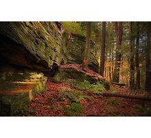 The Enchanted Woods Photographic Print