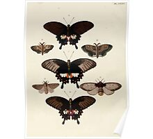 Exotic butterflies of the three parts of the world Pieter Cramer and Caspar Stoll 1782 V3 0282 Poster