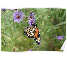 Butterfly - Toronto Island Poster
