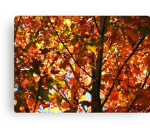 Red, Orange and Yellow Canvas Print