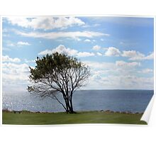 THE OLD TREE AND THE SEA Poster