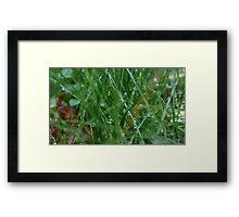 Dewdrops on the Grass Framed Print