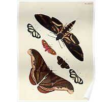 Exotic butterflies of the three parts of the world Pieter Cramer and Caspar Stoll 1782 V2 0110 Poster