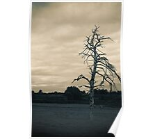 Dead Tree - Ashdown Forest Poster