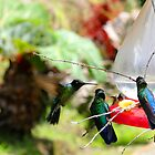 Up Close and Personal Hummingbirds by Al Bourassa