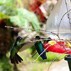 Hovering Beak To Beak by Al Bourassa