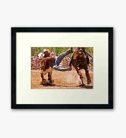 Steer Wrestling Framed Print