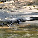 Costa Rican Crocodile by Al Bourassa