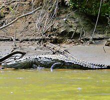 Costa Rica Crocodile II by Al Bourassa