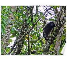 Howler Monkey, Costa Rica Poster