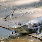 Costa Rican Crocodile III by Al Bourassa