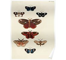 Exotic butterflies of the three parts of the world Pieter Cramer and Caspar Stoll 1782 V4 0323 Poster