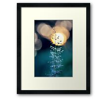 Sunset From The Wild Grass Framed Print