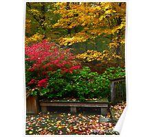 Backyard Colors Poster