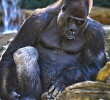 Gorila at Cincinnati Zoo by Nelson Charette