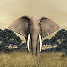 African Bull Elephant by Walter Colvin