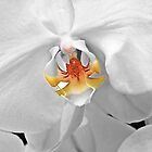 Heart Of The Orchid by phil decocco