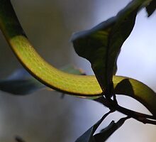 Rough Green Snake IV by zpawpaw