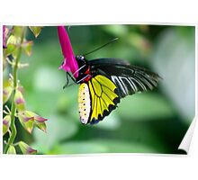 Butterfly Beez Poster