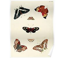Exotic butterflies of the three parts of the world Pieter Cramer and Caspar Stoll 1782 V2 0086 Poster