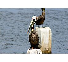 Pelican Plaza Photographic Print