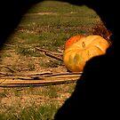Autumn Pumpkins by HeavenlyCanvas