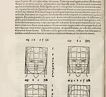 Famous Painter Parts Human Body Symmetry Four Books Geomety 1557 Albrecht Durer 0176 Heads by wetdryvac
